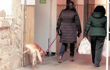 El PP pide el uso de repelente ecológico para tratar el problema de orines de perros y gatos
